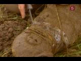 Опасные встречи. Загадка слепого крокодила.2008